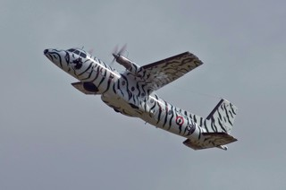 N262E, 51, 28F in a black and white tiger color scheme in flight